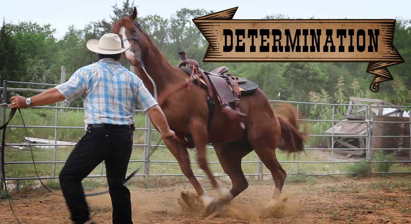 Video Insight: Determination
